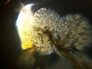 image from the DIY microscope